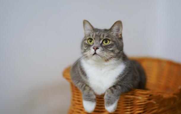 Mustățile pisicii o ajut pe aceasta să se orienteze.