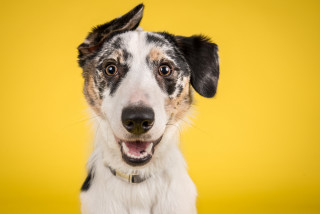 Ce rasă de câine ți se potrivește în funcție de zodie