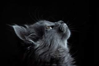 Test de personalitate: Ce animal îți simbolizează sufletul?